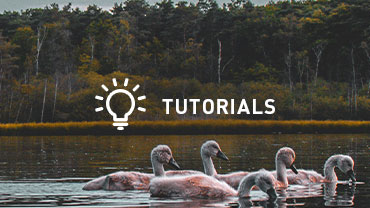 Free online tutorial videos