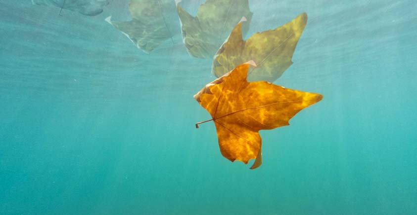 Slow motion leaf underwater